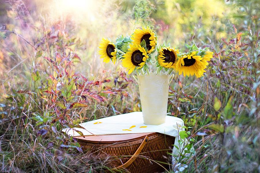 Sonnenblumen - hohenloher-ebene.de